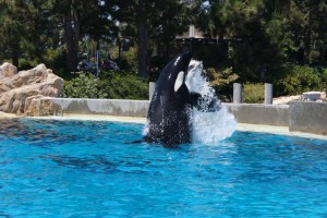 While we had lunch with Shamu