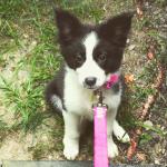 We Have a New Puppy!  Meet Maisie!