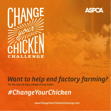 changeyourchicken
