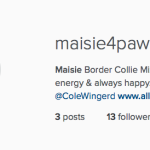 I'm That Person:  I Got My Dog an Instagram Account